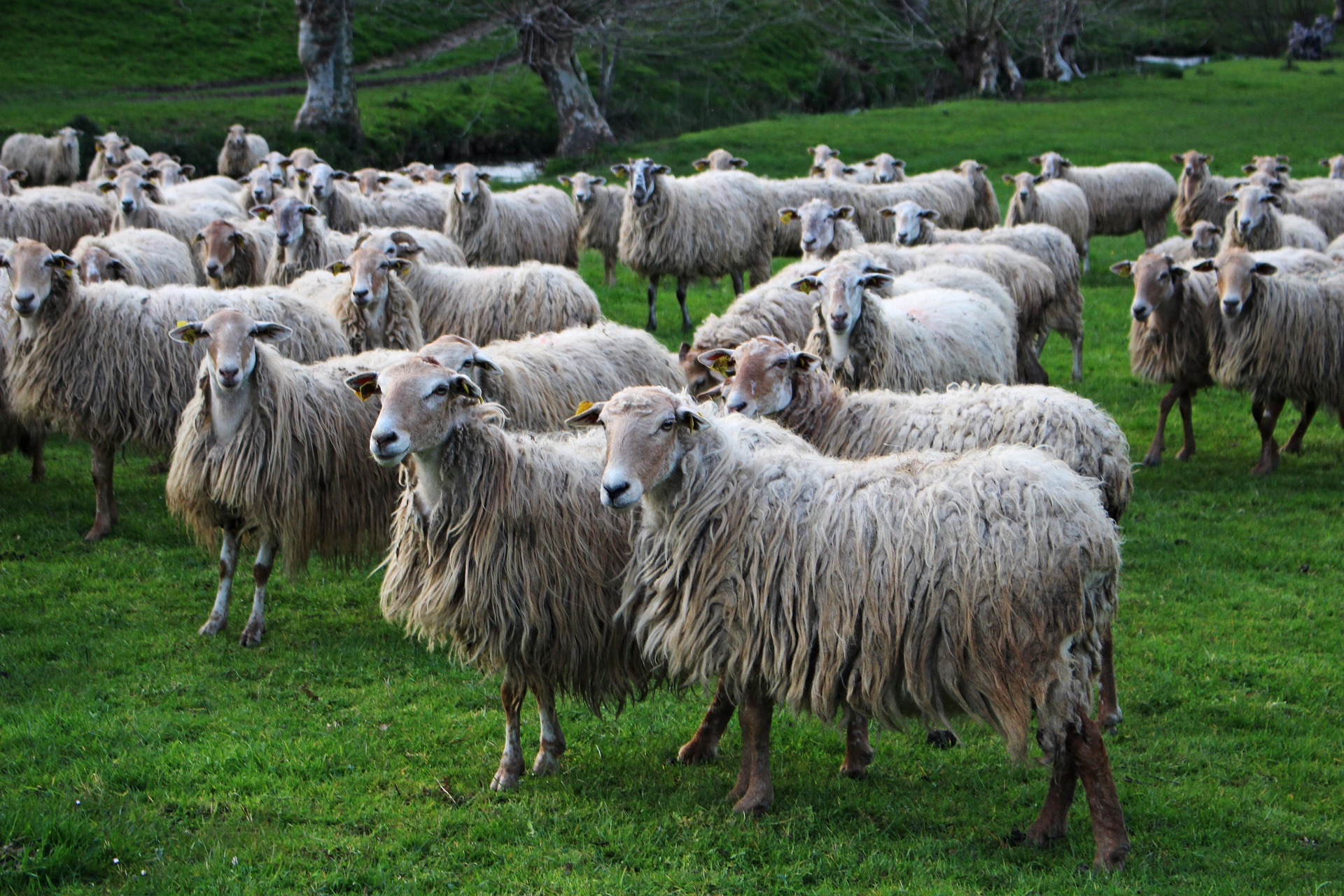 Séminaire Pays-Basque